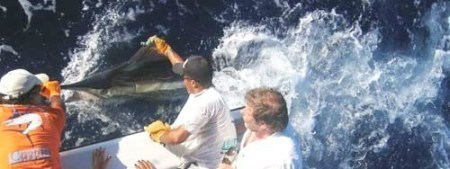 Big Game Fishing,Blue Marlin